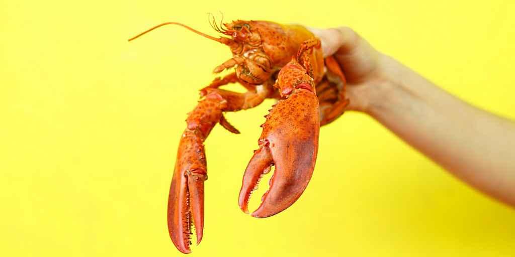 Le ventre d'un homard peut remplacer des pneus de voiture