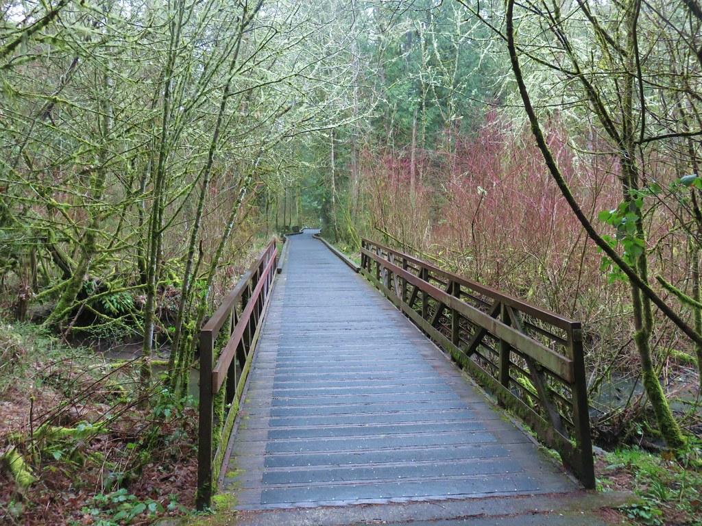 Vine Maple Trail crossing Cedar Mill Creek
