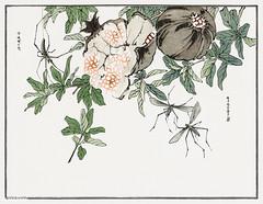 Spider illustration from Churui Gafu (1910) by Morimoto Toko. Di