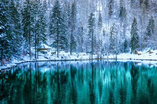 Enjoying the beauty of snow...