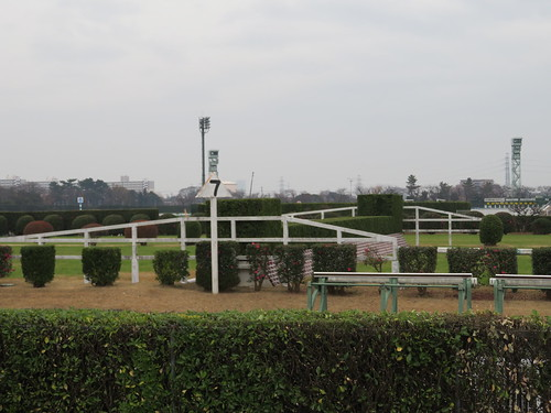 中山競馬場の7号大生垣