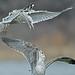 Gulls Squabble Over Turf