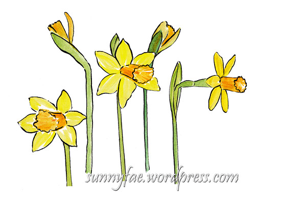 watercolour sketch of daffodils