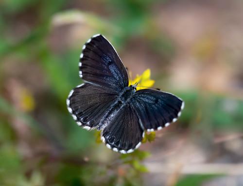 Schmetterlinge_20