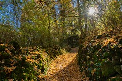 Chemin d'automne - Photo of Ore