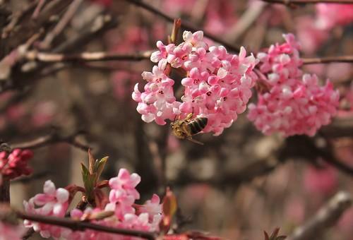 brins de printemps - Page 3 47369415451_b84e793a21