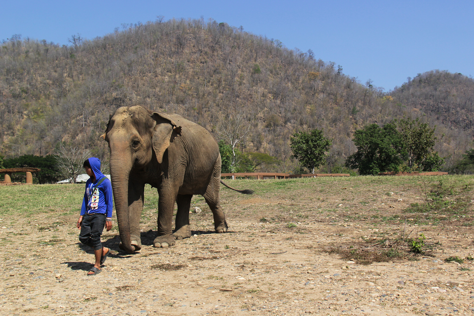 Elephant_Nature_Park3
