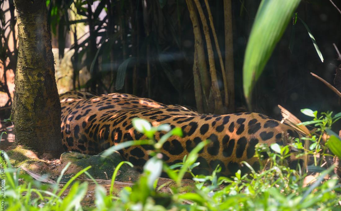 Singapore-zoo-(7)