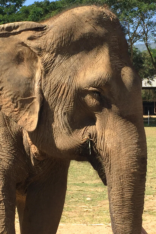 Elephant_Nature_Park_lähikuva