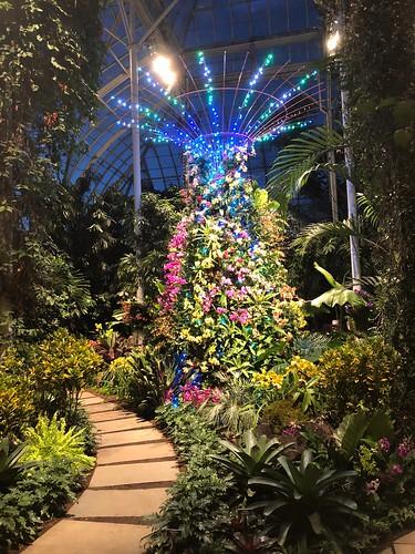 2019 Orchid Show: Singapore, New York Botanical Garden
