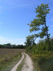 20080916 38218 1017 Jakobus Weg Wiese Bäume - Photo of Pern