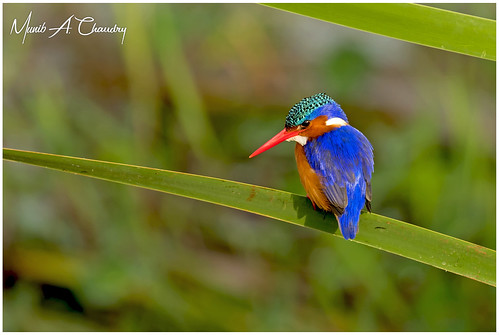 The Beautiful Kingfisher!