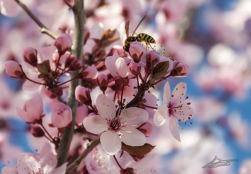 Llega la Primavera 9