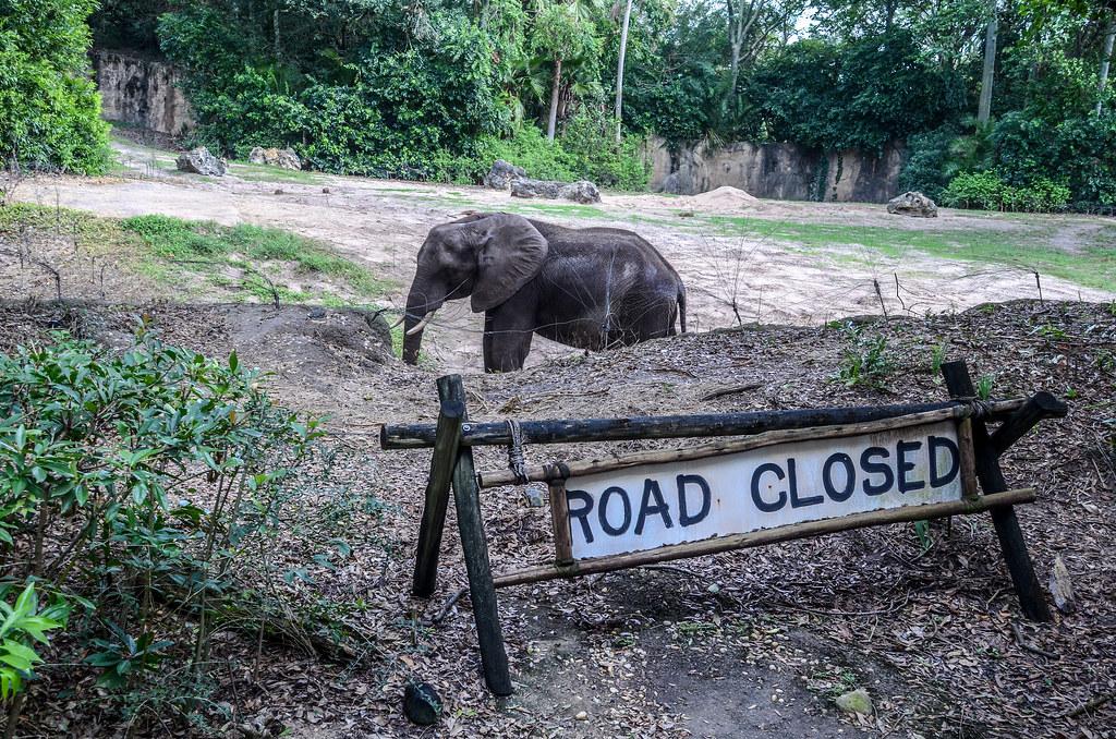 Road closed elephant AK Safari