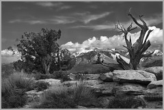 Desert Trees By John Emmel Award Monochrome Prints & POM Feb. 2019