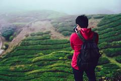 Backpacker traveling into tea field