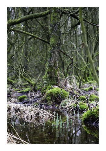 In the peat
