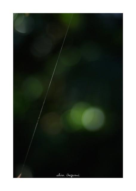 2018/12/24 - 3/24 photo by shin ikegami. - SONY ILCE‑7M2 / Carl Zeiss C Sonnar T* 1.5/50 ZM