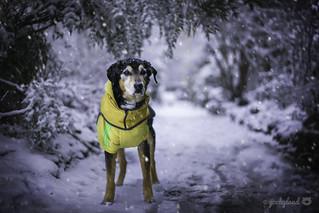 2/12 Jasper - Snowpocalypse 2019