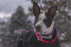 Cruzin Canines Photography posted a photo:	Portrait of Cleo at Garden of the Gods.