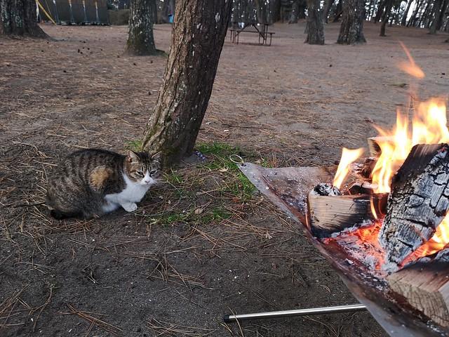 大洗キャンプ場