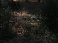 20080907 31672 1008 Jakobus Bäume Ginster Spinnweben - Photo of La Chaze-de-Peyre