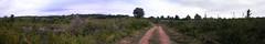 20080914 36753 1015 Jakobus Gebüsch Bäume_P01 - Photo of Espagnac-Sainte-Eulalie