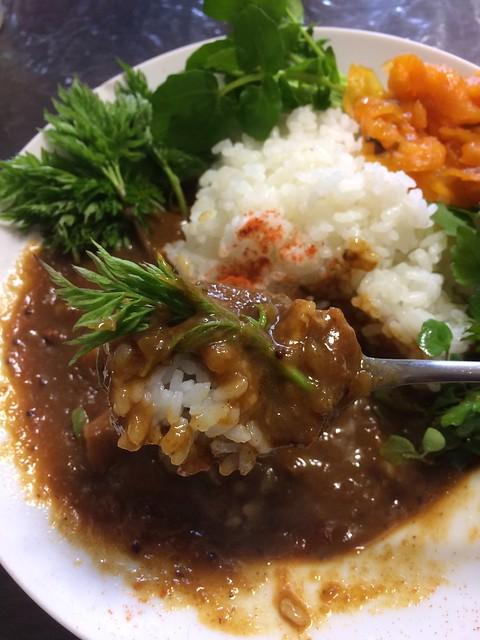 """spicy chicken curry """"ROCA"""" with Wild Herve"""