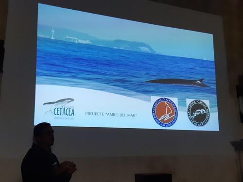 Conferència cetacea