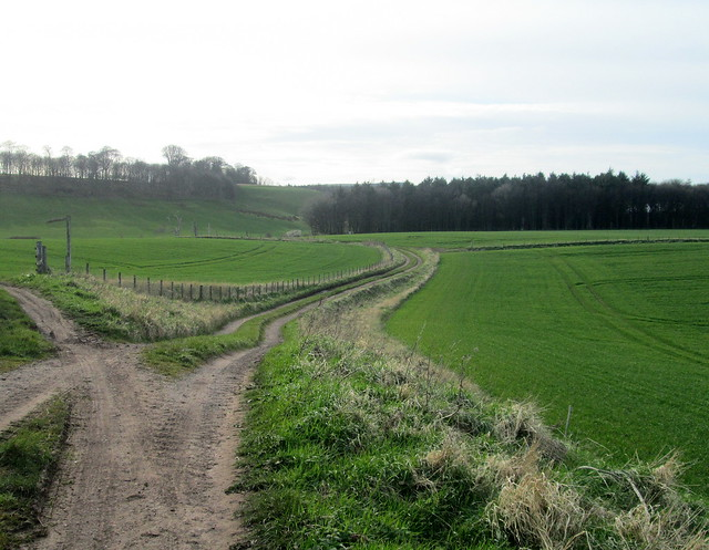 Farmland, Cockburnspath, Scottish Borders