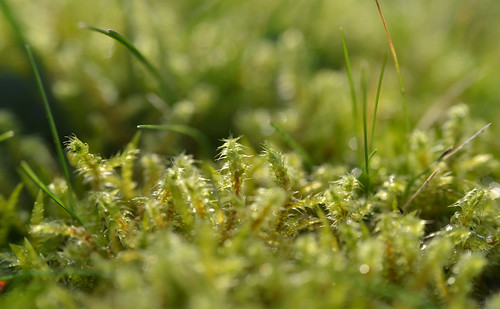 My Mother-in-law's front lawn is 90% moss