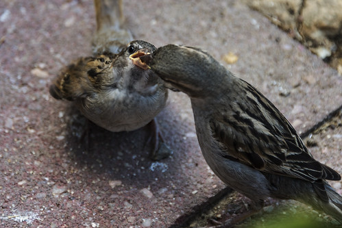 Feeding the young