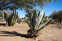 Cactus Garden 7883