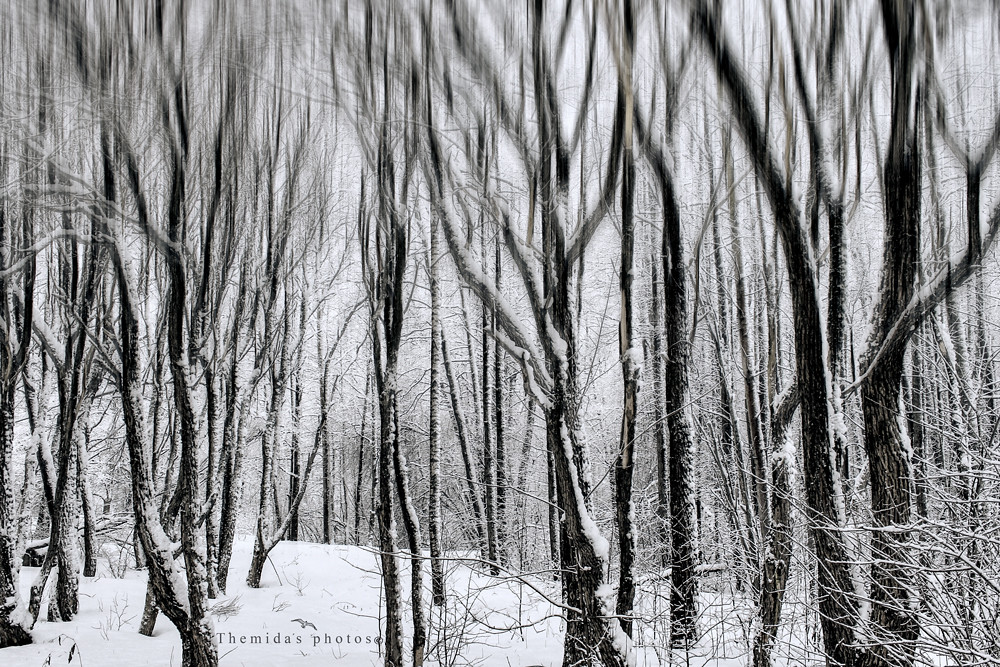 Abstract forest  - Download Photo - Tomato to - Search