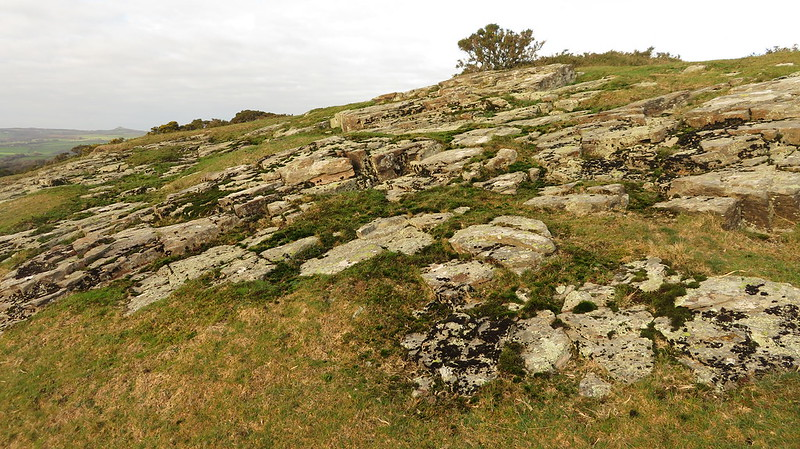 Prowtytown Rocks