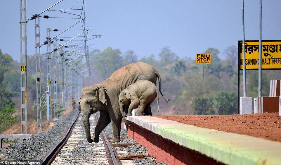 Elefante-y-su-cria-huyendo-de-aldeanos