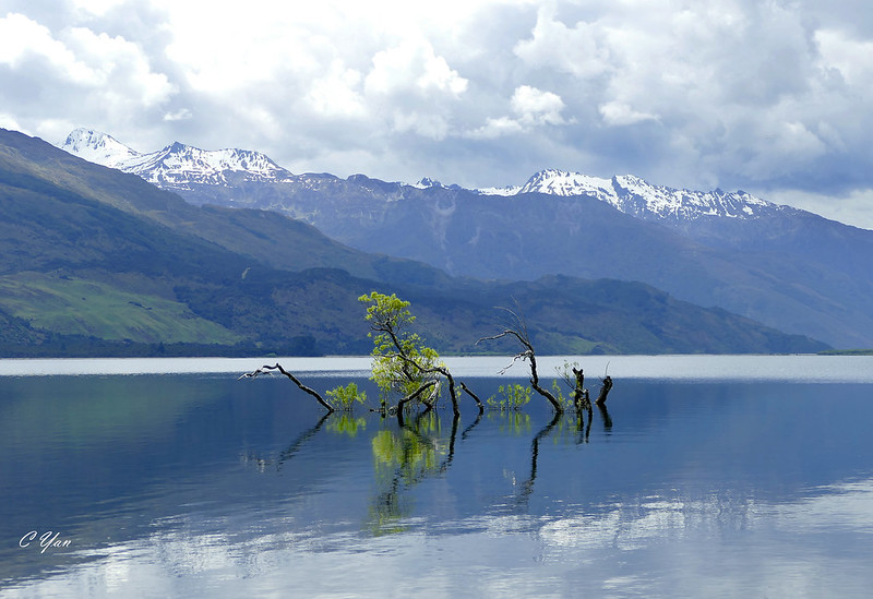 New Zealand - Westland