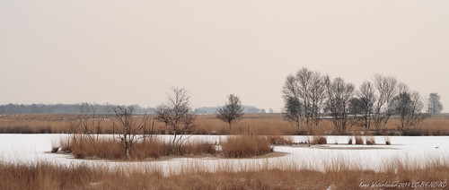 A winters day in Bargerveen