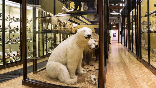 Gallery 1 of The Natural History Musem at Tring