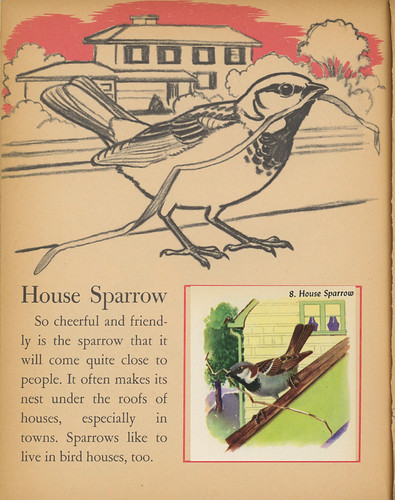 House Sparrow in Little Golden Activity Book: Bird Stamps