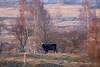 Milovice Nature Reserve