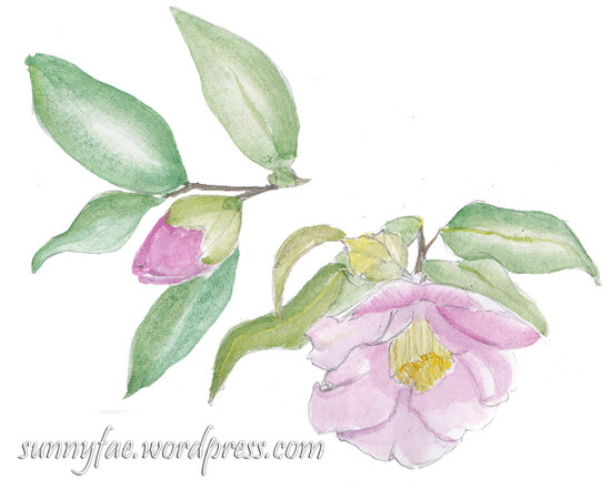 camellia watercolour sketch