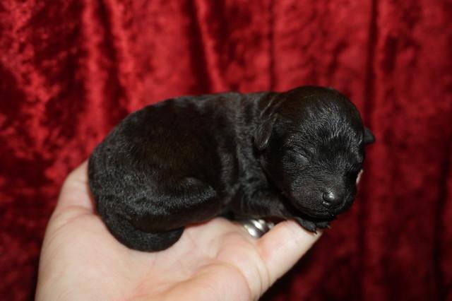 1 Lady 6.8 oz 2 days old (14)