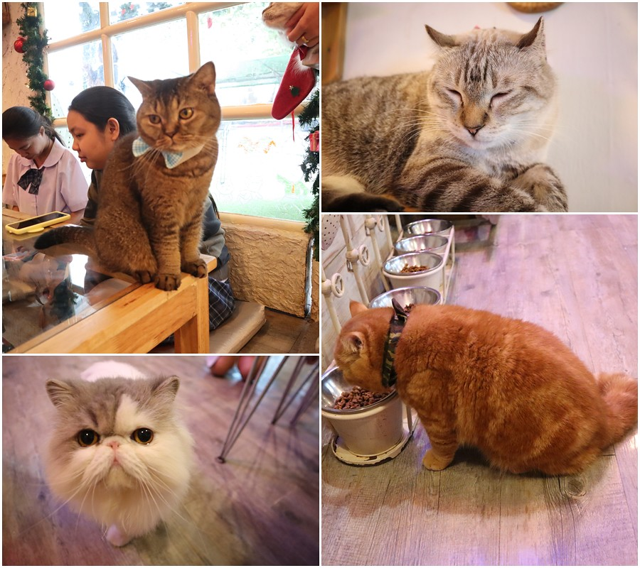 Caturday cat cafe (40)