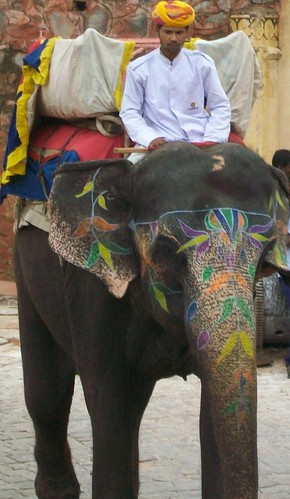 Elephant rider. From an exceprt from Only in India: Adventures of an International Educator