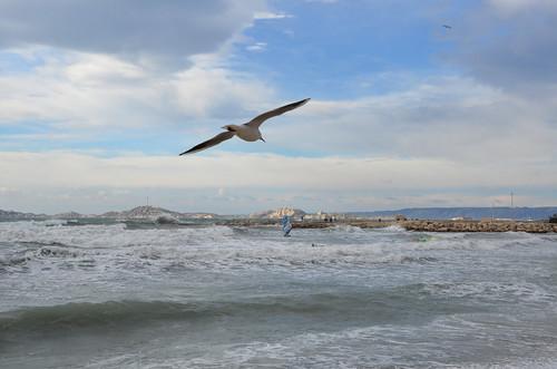 mer marseille paca bouchesdurhöne animal oiseau paysage plage île
