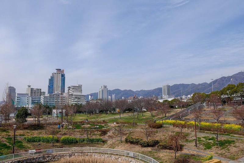 西郷川河口公園 河津桜 2019