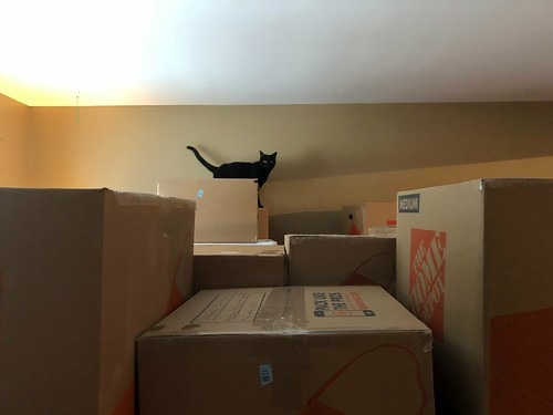 Martha Cat and moving boxes