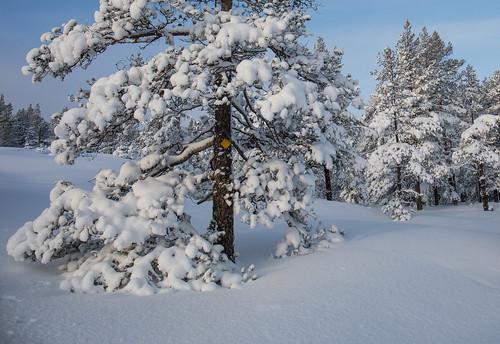 Arbre couvert de neige
