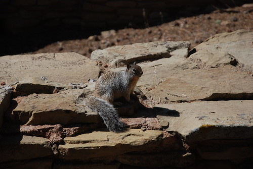 Squirrel Joining the Tour. From History Comes Alive at Chimney Rock National Monument